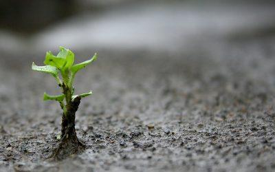 Abriendo el surco a la semilla de la Esperanza